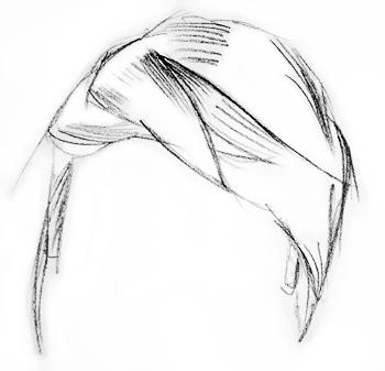 drawing-hair-step2
